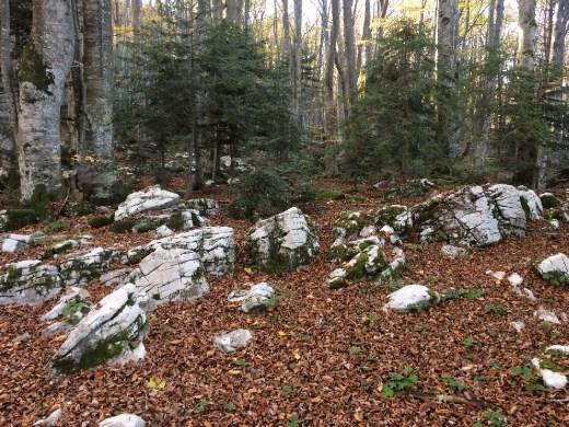 Limestone ridges amid the forest.
