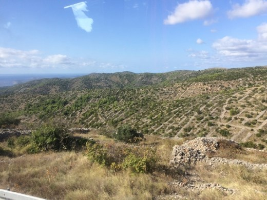 A view from the bus window of the thousands of stone walls on the island made as rocks were pulled out of the fields.