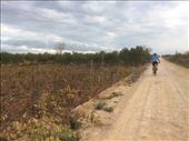 Stari Grad Plains as seen by bike.: by shire_girl, Views[47]