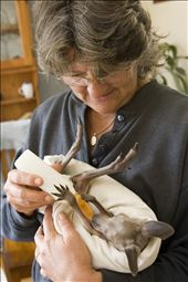 A volunteer opens up her home to the joeys, feeding special formula.: by shootingben, Views[292]
