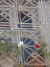 Flowers growing through the cages: by shrummer16, Views[412]