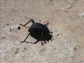 An interesting bug I'd never seen before  :): by shrummer16, Views[272]
