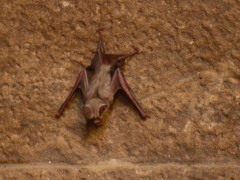 A cute little bat!