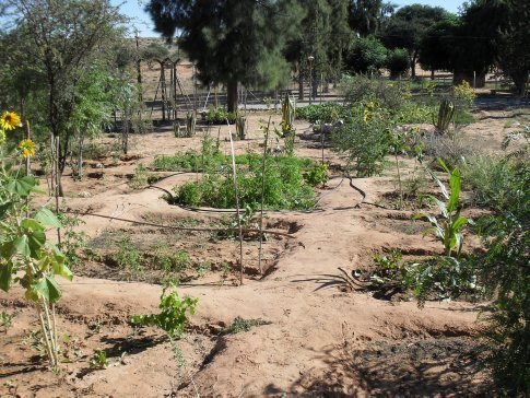 The spread in the back half of the garden, planted by the pre-schoolers and junior classes at the primary school