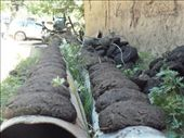 Drying cow patties for fuel... even though it's somewhat of a renewable energy source, it unfortunately decreases soil fertility and thus crop production because the manure is no longer going back into the ground: by shrummer16, Views[186]