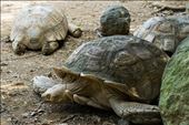 Tortoise: by sierraphotography, Views[151]