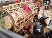 Siem Reap: by sierrayla-1, Views[168]