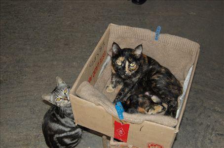 Cesar's cats