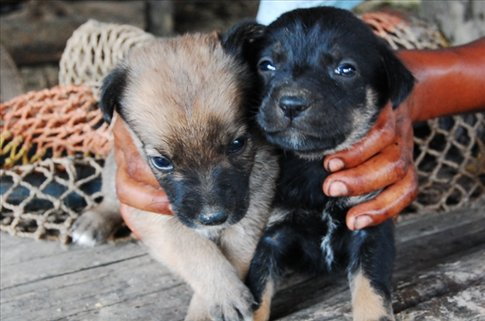 Guadalupes puppies at Juyuintza tribe- Ecuadorian Amazon