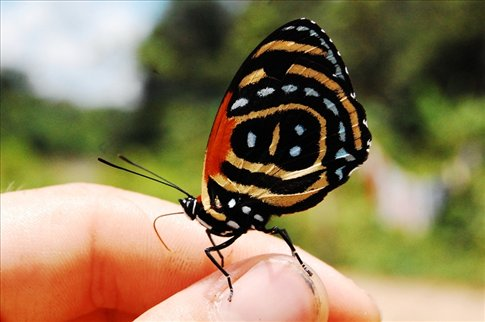 A butterfly in the Amazon