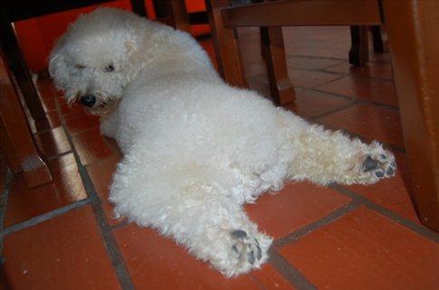 Sich- Monica´s dog - Cucuta