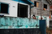 Tefe, Brazil: by simonefrancis, Views[437]