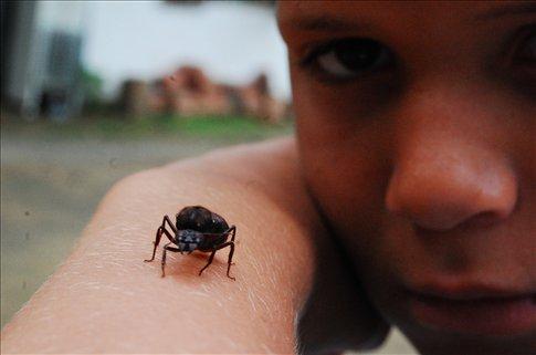 an ant on a kids arm near Xerem