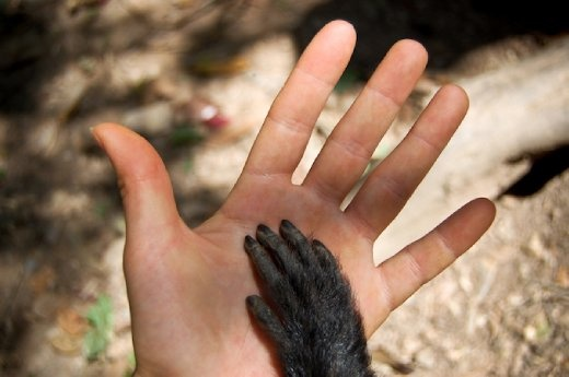 A monkey's (Martin's) hand lying on top of mine. Taken in a Bolivian animal sanctuary where many animals had previously been mistreated. Martin became a close friend.