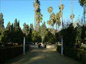 The garden in the Alcazar (Royal Palace): by smartin1978, Views[270]