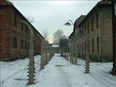Double row of electrified fence at Auschwitz I.: by smartin1978, Views[521]