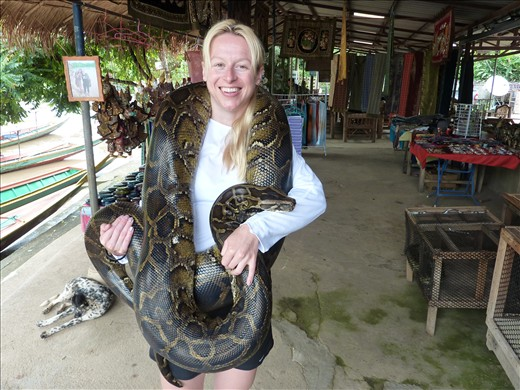 This Burmese Python is 55kgs!