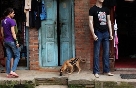 A graffitied dog roams the streets of Bhaktapur, bearing the words