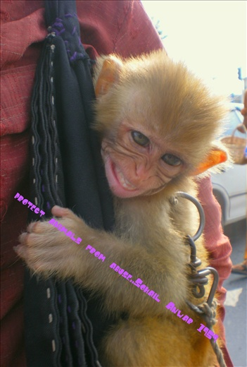 Animals protection rights?              my photography by 7 megapixel cam