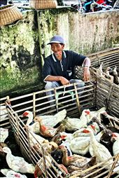 an old happy man with SMILE on the face, peace in the heart, waiting for a buyer to come and buy his commodities, MENTOK  - a local cross breed of duck and goose...: by solo_indonesia, Views[137]
