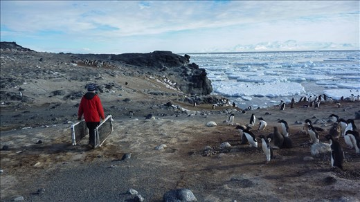 I accompanied a few scientists who were banding and weighing penguins that day.