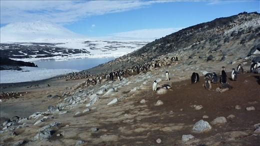 Exploring the beautiful landscape of Cape Royds, Antarctica.