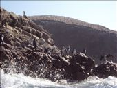 The penguins at the Islas Ballestas off the coast of Peru.. : by spacemanafrica, Views[80]