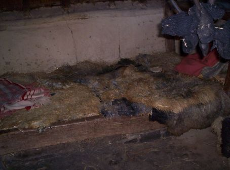 inside the houses lined with straw and covered with goat hide