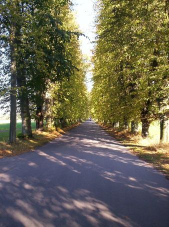 the enterance to the research center lined with trees for a good mile