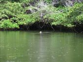 Is that the head of a sea turtle in Black Turtle Bay?  : by sregevig, Views[278]