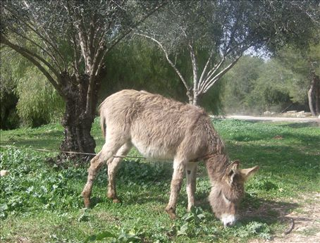 This donkey's head is waaaay too big for its body. Maybe you need to see it in person.