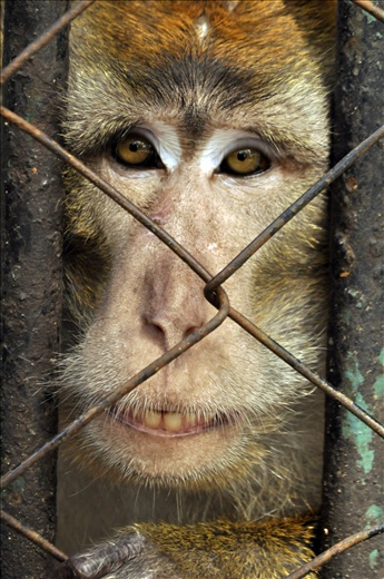 """They say that the eyes speak louder than words. I can't talk to monkeys, but when I looked at his eyes at that moment – he told me two words alone...""""Help me."""""""