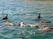 Die Seelöwen und ich! Ich bin der Linke!: by steffen_graz, Views[337]
