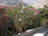 Pisco Elqui: by steffen_graz, Views[187]