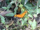 Schmetterling: by steffen_graz, Views[188]