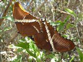 Schmetterlingsex!: by steffen_graz, Views[182]