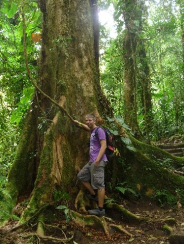 großer Baum!