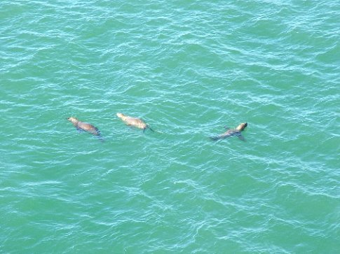 Sea lions lazing around, Tommy Ryan style!
