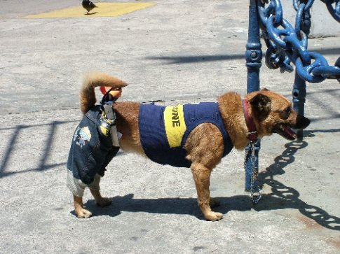 Even the dogs here are ardent Boca fans