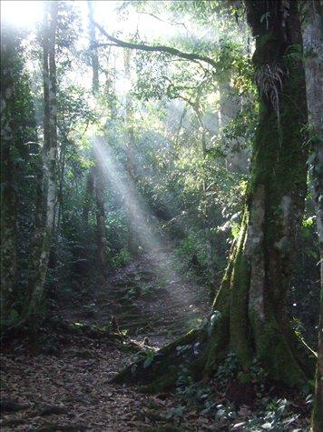 The mossy trail up Gunung Berembum