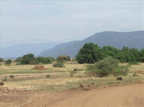 Lake Manyara is a lovely park with less visitors than the other on the Northern Circuit.