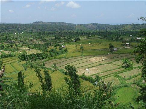 Rice terraces around Tirtagangga.