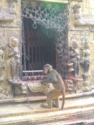 The temple is also known as the monkey temple for some reason.