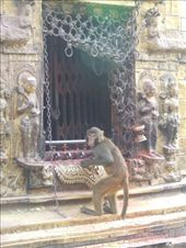 The temple is also known as the monkey temple for some reason.: by steve_and_emma, Views[213]