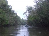 A small tributary off the Kinabatangan where we saw lots of proboscis monkeys. : by steve_and_emma, Views[323]