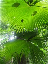The flora of Tongkoko National Park which was a highlight of our trip.: by steve_and_emma, Views[721]
