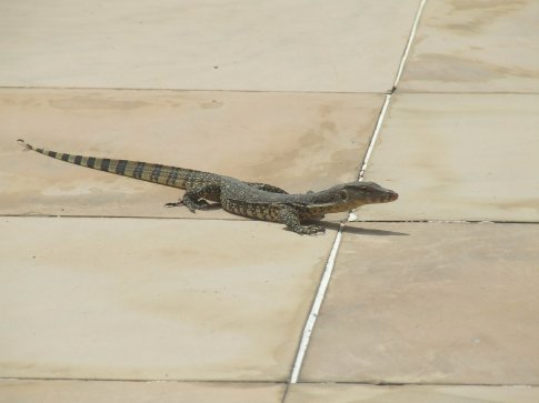 One of the few hotel guests!