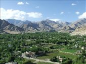 Looking towards the Chanspa area of Leh. Just about the only bit of green for miles around.: by steve_and_emma, Views[275]