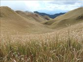 Unusual to see grassy plains on a mountain in S.E. Asia.: by steve_and_emma, Views[1268]