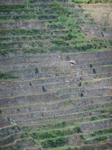 The slopes of the terraces are extremely steep.